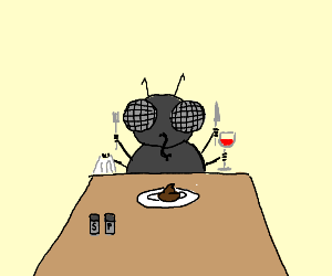 Flies eating poop