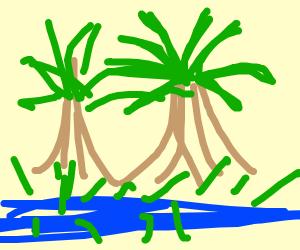 A Bayou