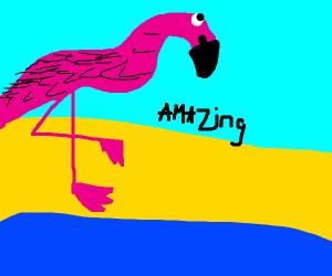 Amazing Flamingo