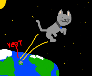 cat gets yeeted to space hell