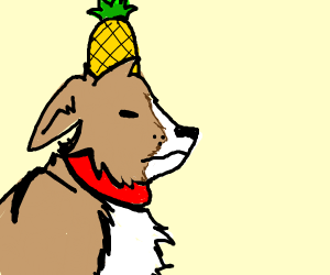 Dog wears pineapple on it's head