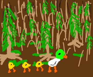 ducks on a hiking trip