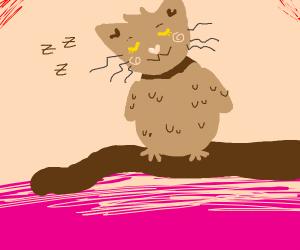 sleepy cat owl