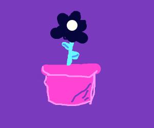 Big purple flower.