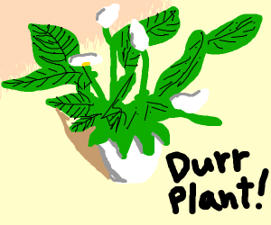 Durr Plant [I hate everything meme)
