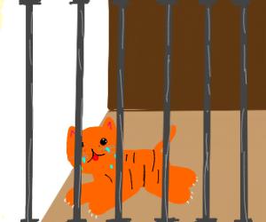 Sad cat in prison