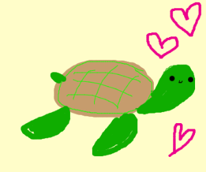 Turtle loves me