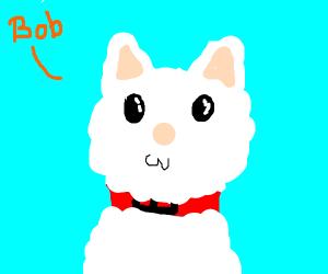 A Cat named Bob