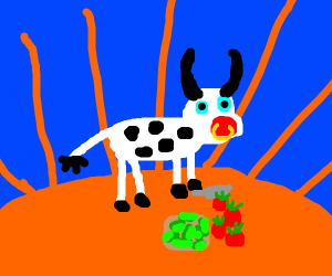 Cow cooking in sun