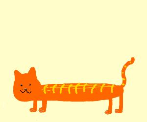 loooooong cat