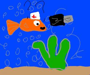 Nurse fish struggles with USB stick