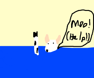 Cow is drowning