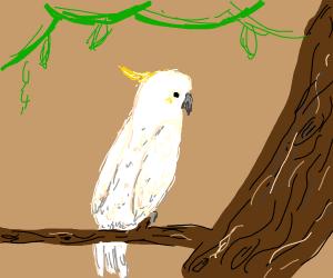 cockatoo stares at tree