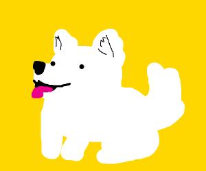 fluffy white puppy!!!