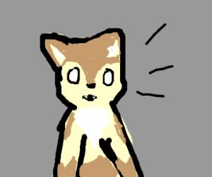 surprised pupper