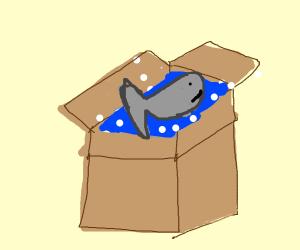 Fish takes bubble bath in box
