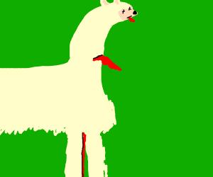 dead llama