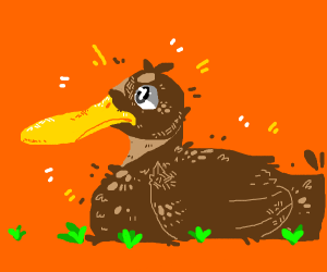 a brown duck