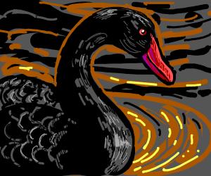 black swan swims in ocean