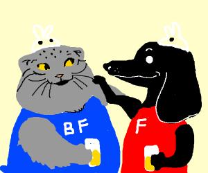 Pallas Cat and Dachshund, BFFs!