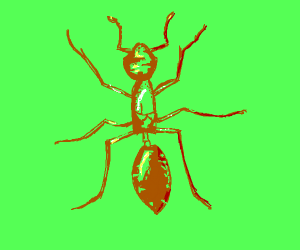 a brown ant