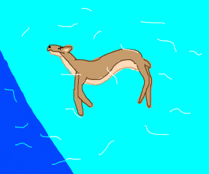 Snorkeling deer
