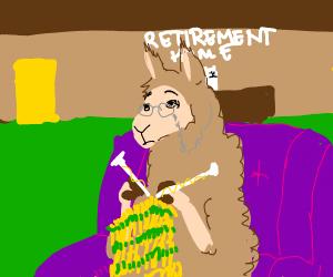 llama in retirement