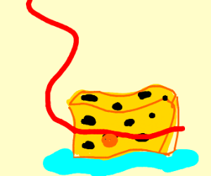 pet sponge