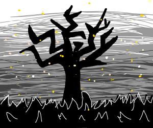 tree in a feild