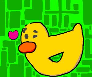 flirtatious duck