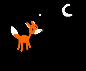 Clever Fox in the dark