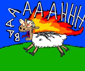 a burning sheep