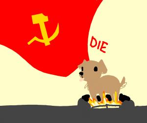 Communism cooks puppy