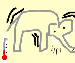 shivering elephant