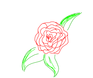 A simple rose