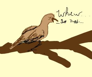 extremely tired kiwi bird