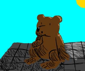 Bear is on da roof