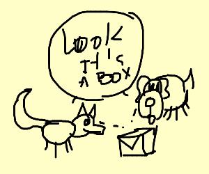 foxanddog.Daytime.lookingatboxlabelledMWAH