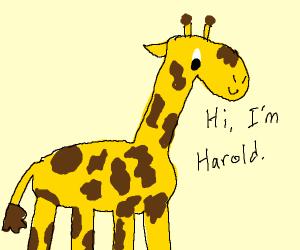 Harold the giraffe