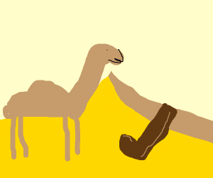 Camel in the desert sees a lone boot