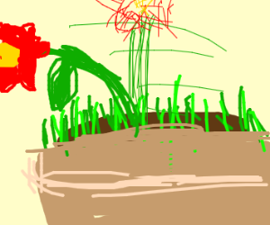 Single red flower in large pot with grass