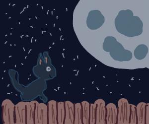 Black cat gazing at the moon on a dark night