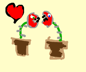 two venus fly traps in luv