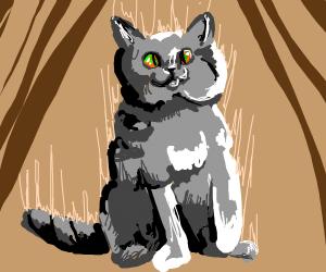 Cross eyed house cat