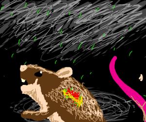 Poor Little Rat Caught in Acid Rain