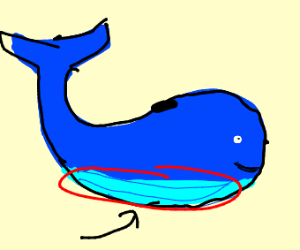 Whale belly