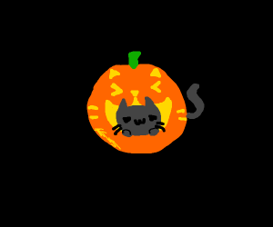 Cat inside a pumpkin