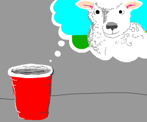 cup thinks about sheep