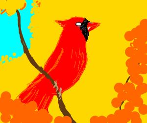 blind bird