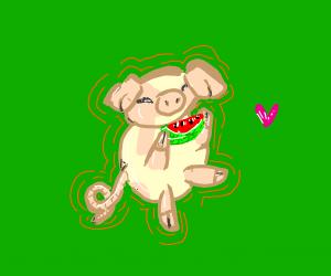 pig eating watermelon